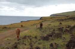 Parmi les chevaux.jpg